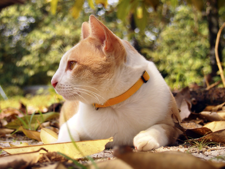 lies down: A brown cat lies down in the garden Stock Photo