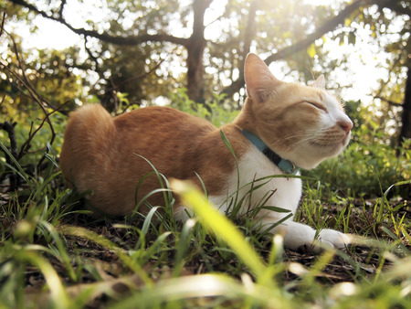 gato naranja: A orange cat sleeps in the forest Foto de archivo