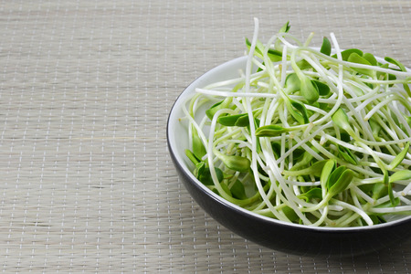 egalitarian: sunflower sprout Stock Photo