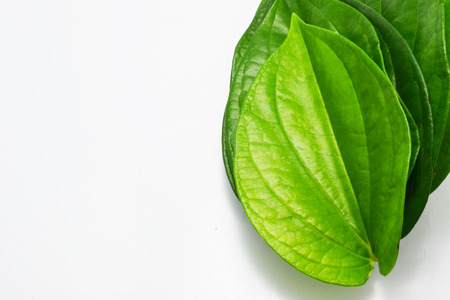 quicklime: green leaf Stock Photo
