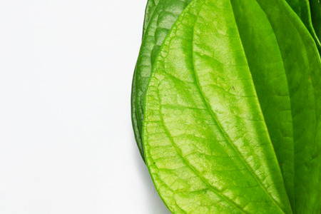 quicklime: betel close up