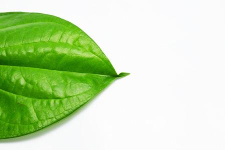 betel: betel