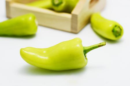 capsicum plant: bell pepper