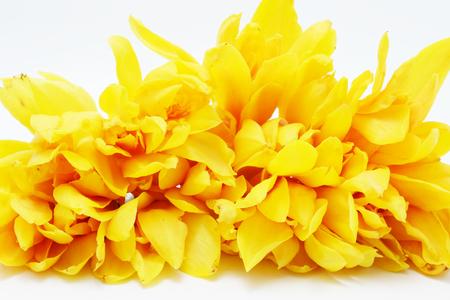 champa flower: champaca