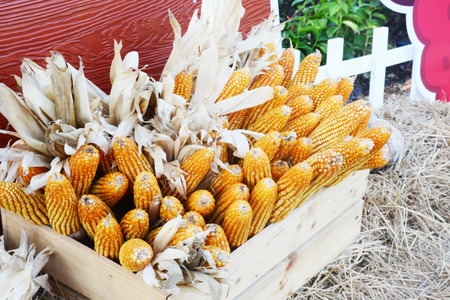 wood box: corn in wood box Stock Photo