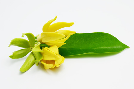 vandal: ylang ylang Stock Photo