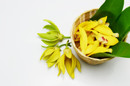 ylang ylang Stock Photo