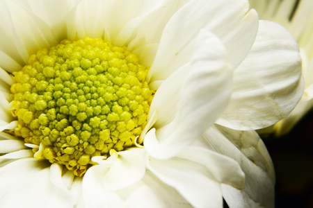 carpel: macro of  flower carpel