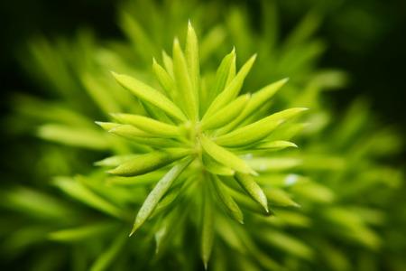 gagged: gagged of fern