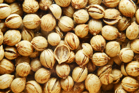 coriander seeds: coriander seeds Stock Photo