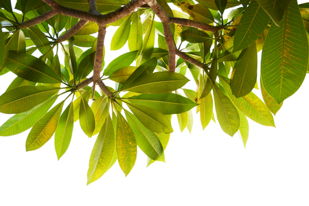 tree leave