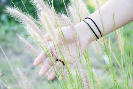 filed: hand and grass filed Stock Photo