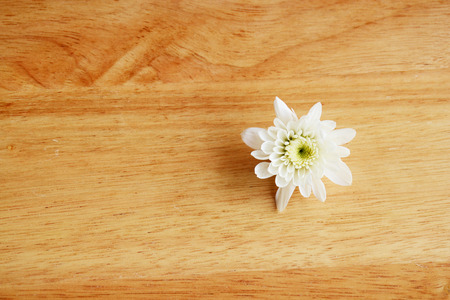 decorate: white flower in macro style and decorate Stock Photo