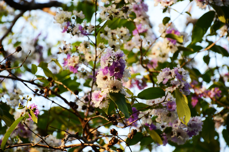 sere: flower in season Stock Photo