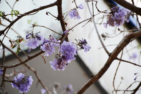 sere: flower on season