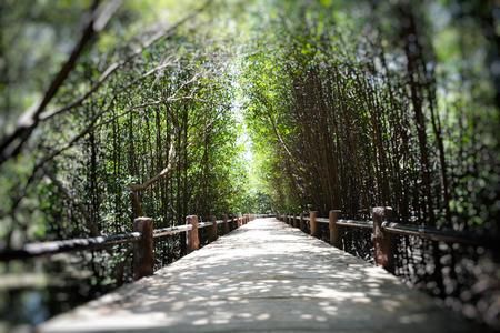 mangrove: mangrove forest Stock Photo