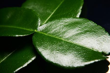 bergamot leave in macro style Stock Photo