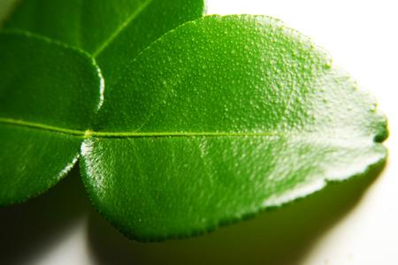 on leave: bergamot leave in macro style Stock Photo