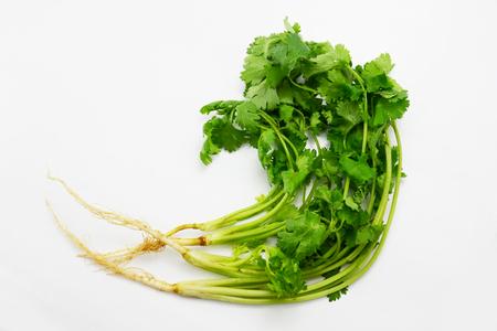 culantro: cilantro