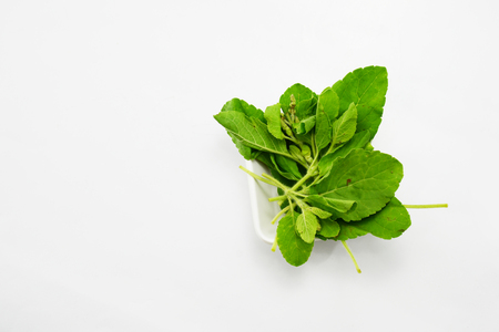 on leave: basil leave Stock Photo