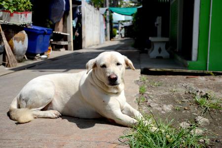 stray: dog, street dog,