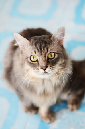 longhair: cat longhair