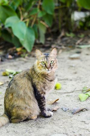 cat in garden , park Stock Photo