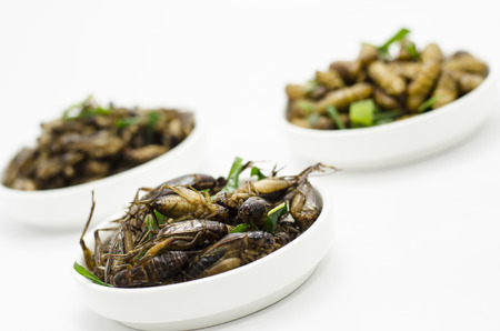 warm and grasshopper fried for food