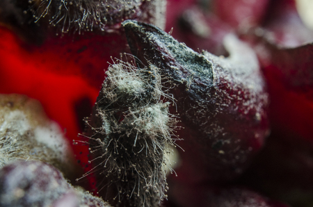 mold on fruit and food