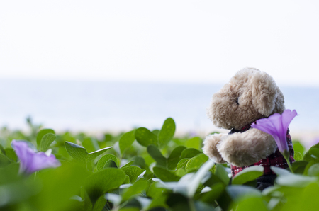 bear doll on beach