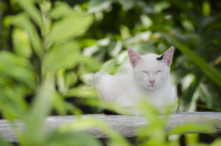 white cat on green garden chillout Stock Photo
