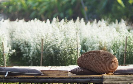 Margaret fram blooming on season for chiangmai holiday traveling to visit Standard-Bild - 138625656