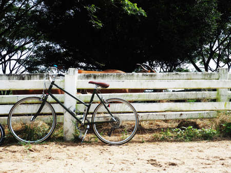 bicycle parking next to white wall and farm of cow