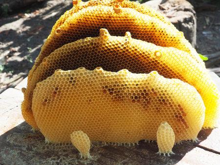 hexagon of honey bee honey nest local product nature real Standard-Bild