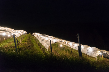 plot: Vegetable plot with lighting at night