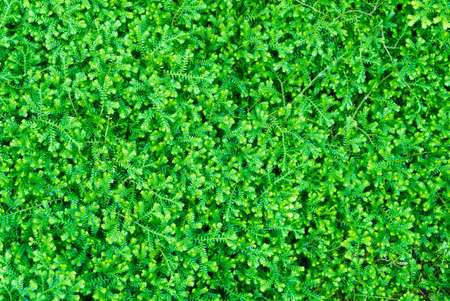 green background texture: Green moss texture for background Stock Photo