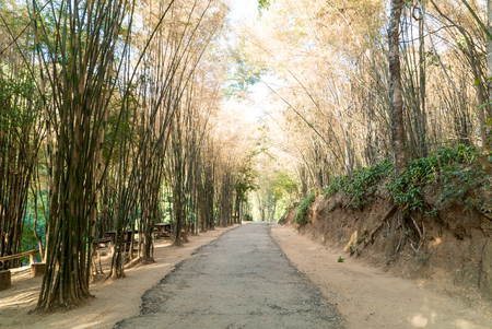 penetrate: Road with bamboo forest in Chiang Mai,Thailand. Warm tone filter Stock Photo
