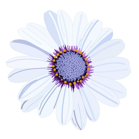 white daisy flower isolated on white background Illusztráció