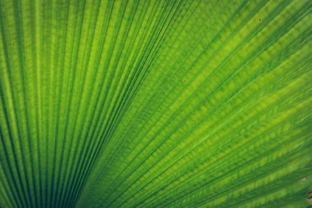 palm leaf tropical plant, abstract green nature pattern texture background Stock fotó