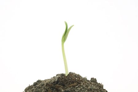 Origin of a new life in the nature of plants Stock Photo - 8126208