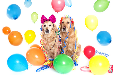 ballons: golden rertiever party with ballons