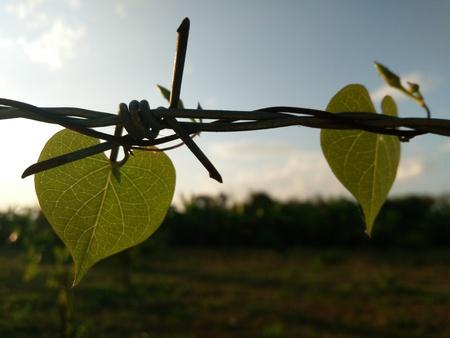 bosk: leaves Stock Photo
