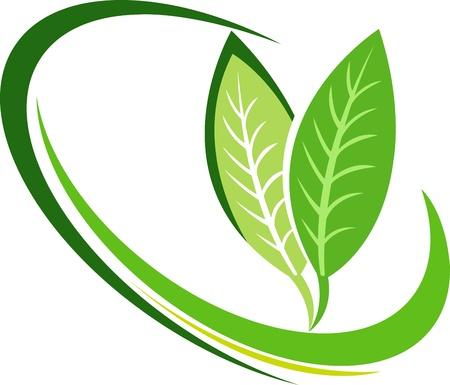 隔離された背景を持つ葉のロゴのイラスト アート  イラスト・ベクター素材