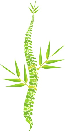 columna vertebral: Arte de la ilustración de un hombre de la columna vertebral de hojas de bambú con fondo blanco