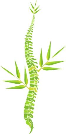columna vertebral: Arte de la ilustraci�n de un hombre de la columna vertebral de hojas de bamb� con fondo blanco