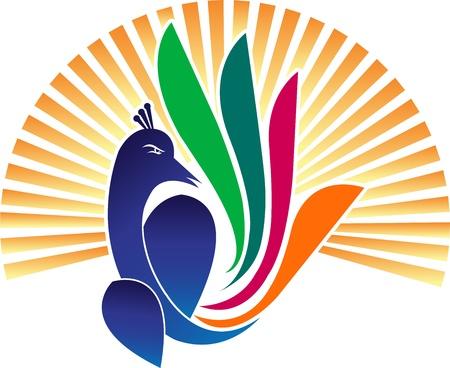 lineas decorativas: Arte de la ilustración de un pavo real con el fondo aislado