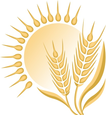 Illustration art of a wheat with isolated background