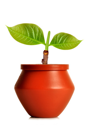 progressive art: two leaf plant in flower pot with isolated background