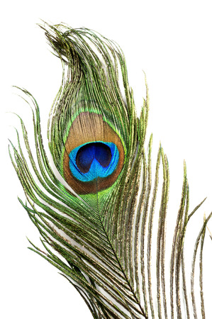 peacock feather eye with isolated background