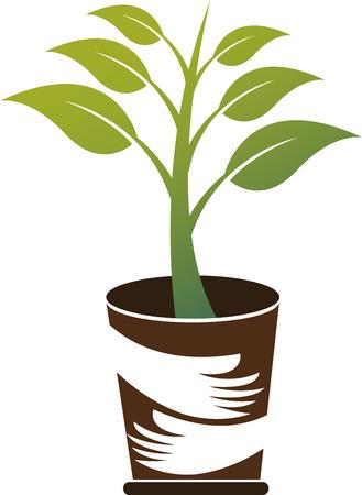 eco slogan: Arte de la ilustraci�n de un icono de la planta cuidado con el fondo aislado